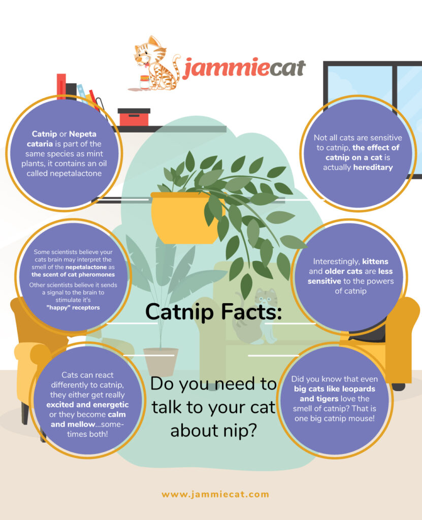 Catnip-Facts-Do-you-need-to-talk-to-your-cat-about-nip-Infographic